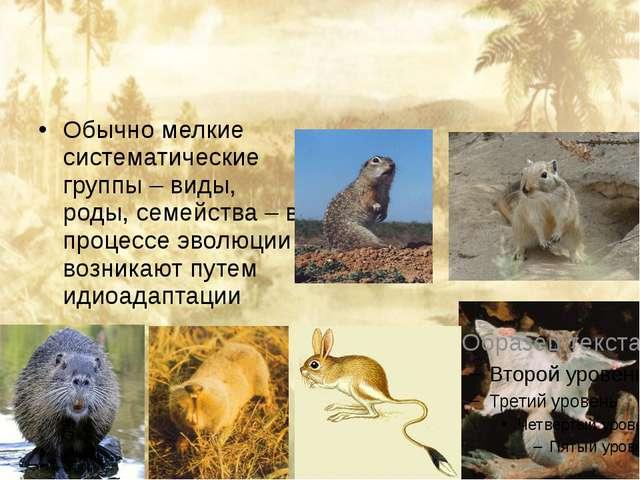 Обычно мелкие систематические группы – виды, роды, семейства – в процессе эв...
