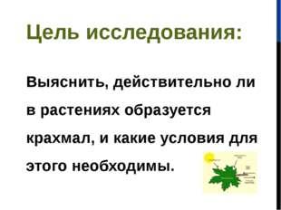 Цель исследования: Выяснить, действительно ли в растениях образуется крахмал,