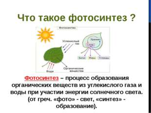 Что такое фотосинтез ? Фотосинтез– процесс образования органических веществ