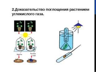 2.Доказательство поглощения растением углекислого газа.