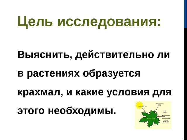 Цель исследования: Выяснить, действительно ли в растениях образуется крахмал,...