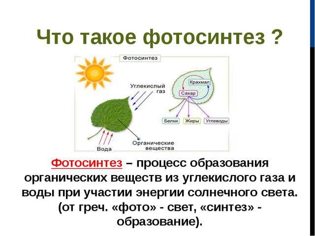 Что такое фотосинтез ? Фотосинтез– процесс образования органических веществ...
