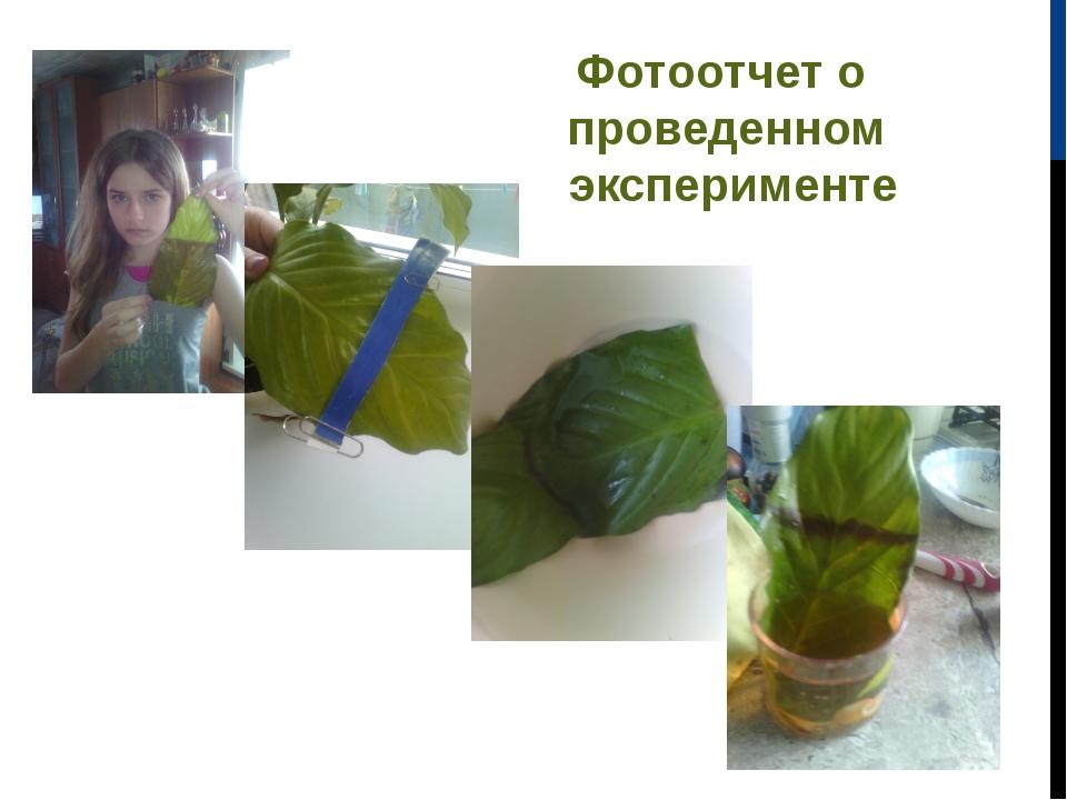 Фотоотчет о проведенном эксперименте