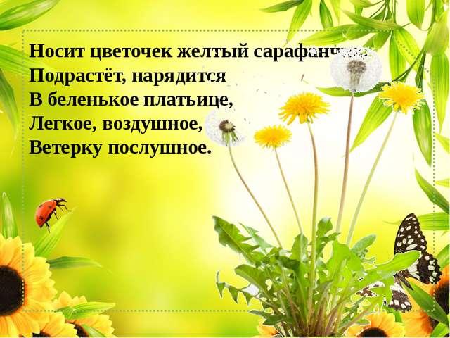 Носит цветочек желтый сарафанчик, Подрастёт, нарядится В беленькое платьице...