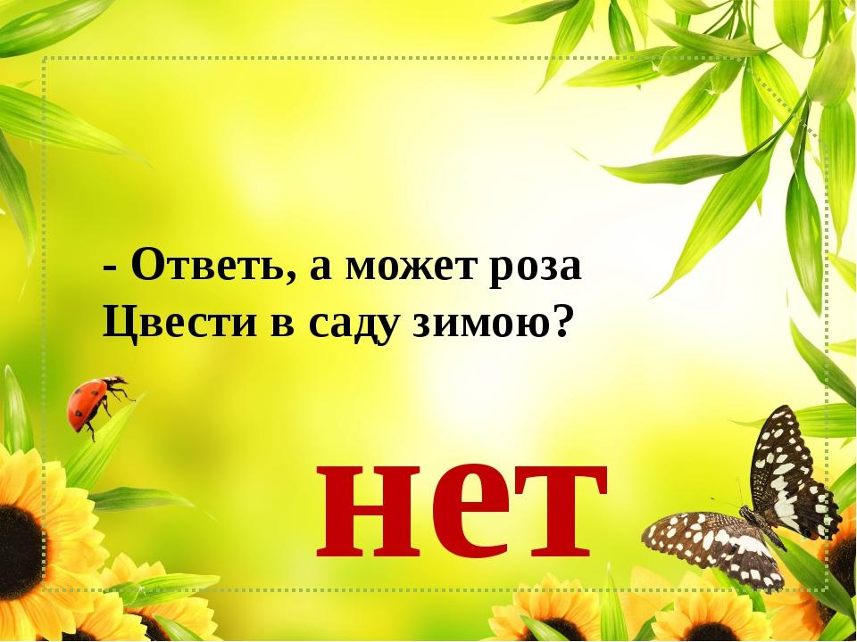 - Ответь, а может роза Цвести в саду зимою? нет