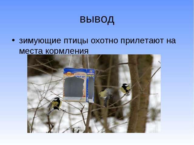 вывод зимующие птицы охотно прилетают на места кормления
