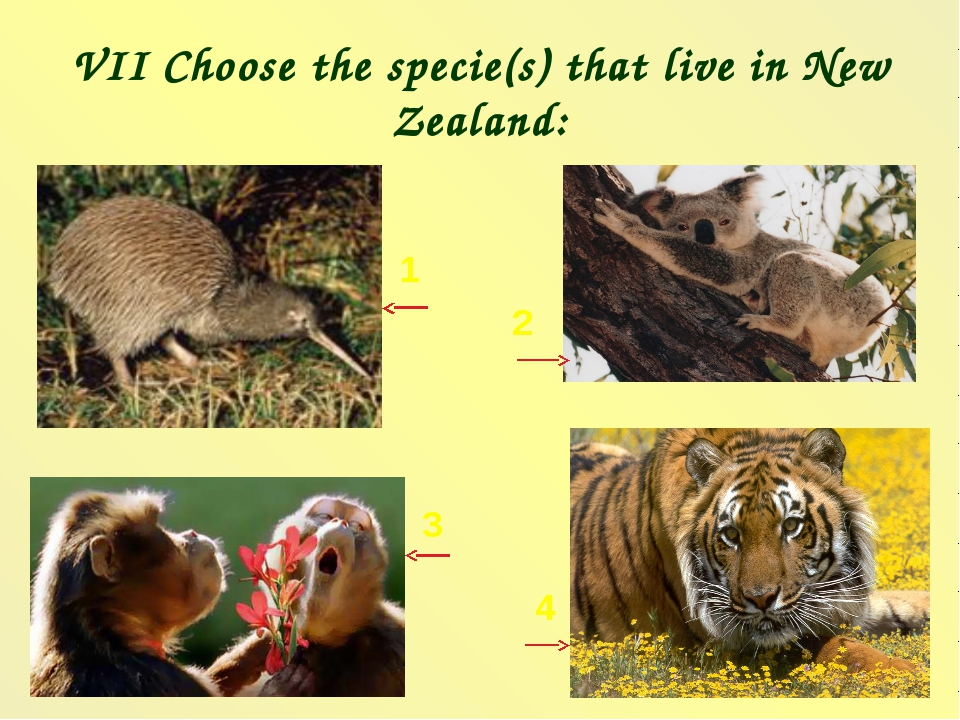 VII Choose the specie(s) that live in New Zealand: 1 2 3 4