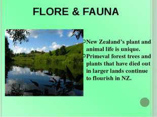 FLORE & FAUNA New Zealand's plant and animal life is unique. Primeval forest
