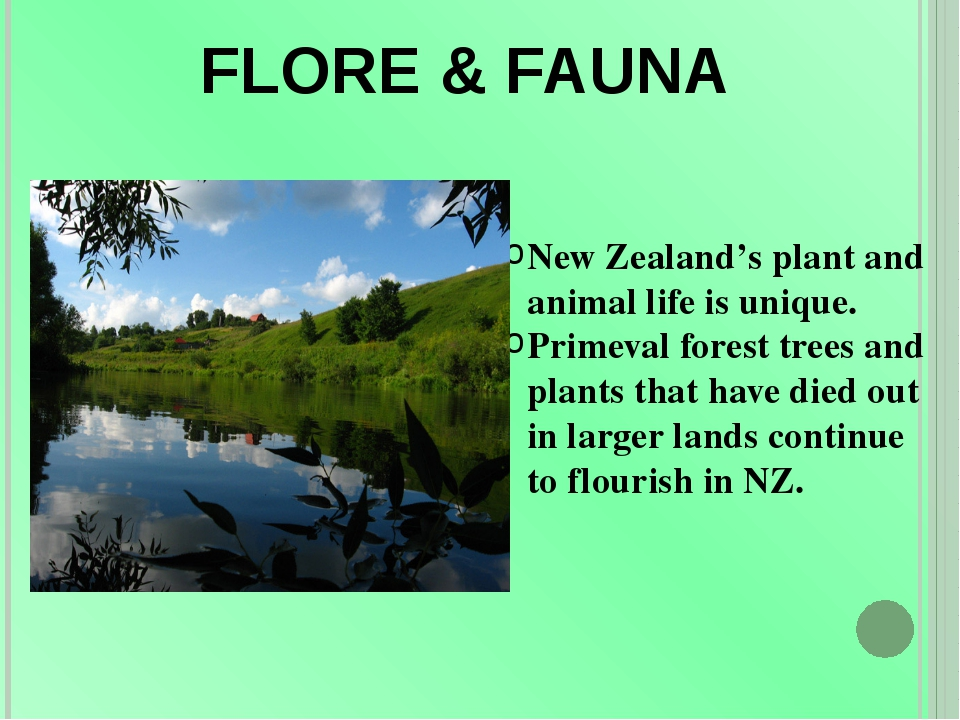 FLORE & FAUNA New Zealand's plant and animal life is unique. Primeval forest...