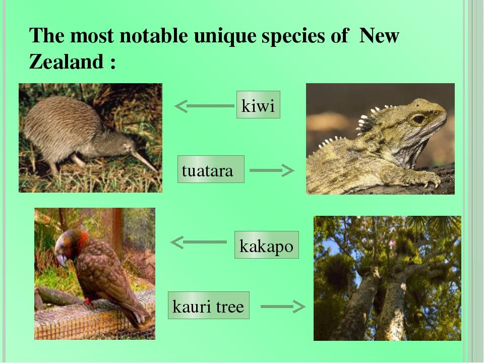 The most notable unique species of New Zealand : kiwi tuatara kakapo kauri tree