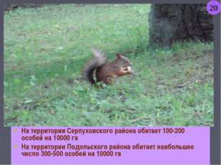 На территории Серпуховского района обитает 100-200 особей на 10000 га На терр