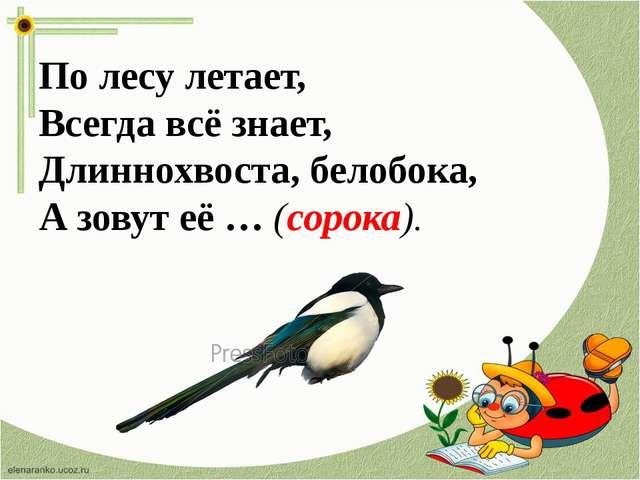 По лесу летает, Всегда всё знает, Длиннохвоста, белобока, А зовут её … (сорок...
