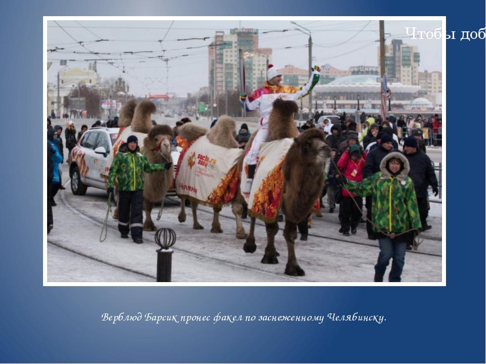 Верблюд Барсик пронес факел позаснеженному Челябинску. Надпись