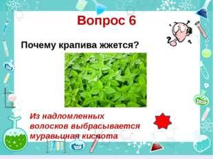 Вопрос 6 Почему крапива жжется? Из надломленных волосков выбрасывается муравь
