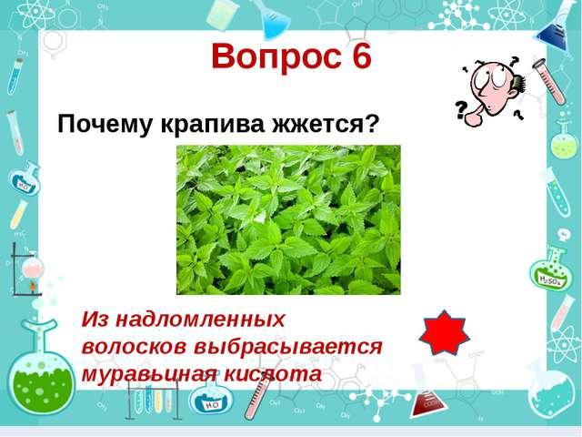 Вопрос 6 Почему крапива жжется? Из надломленных волосков выбрасывается муравь...