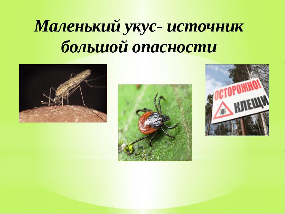 Маленький укус- источник большой опасности