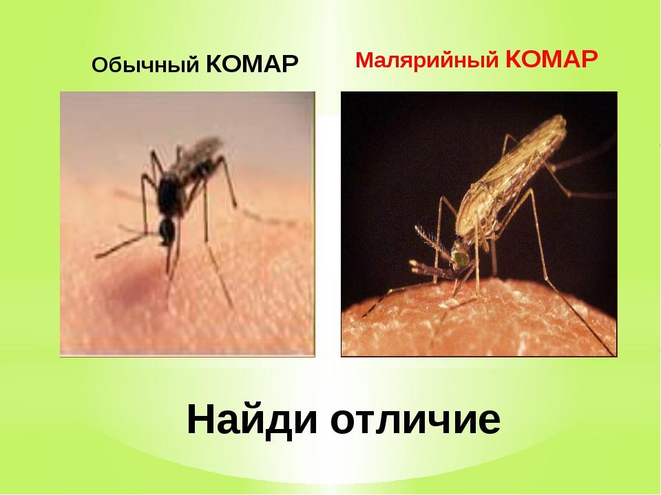 Обычный КОМАР Малярийный КОМАР Найди отличие
