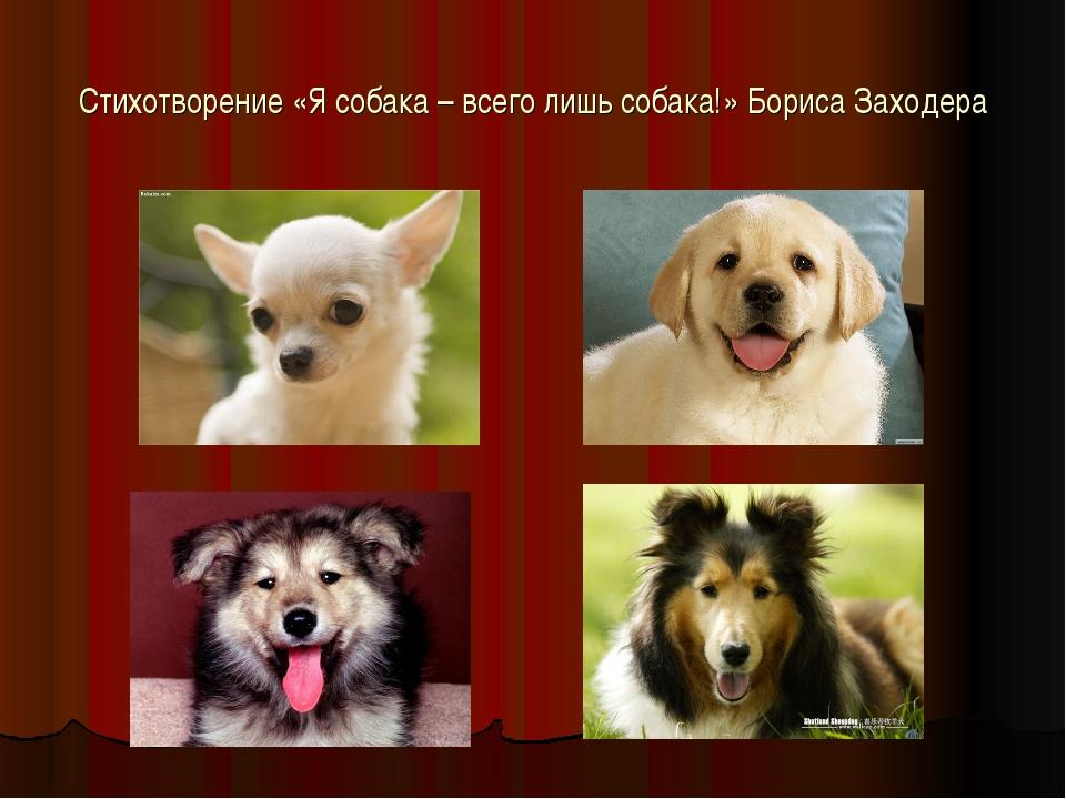 Стихотворение «Я собака – всего лишь собака!» Бориса Заходера