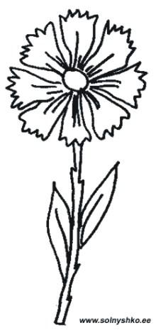 Каталог раскрасок. Скачать раскраски из категории Растения