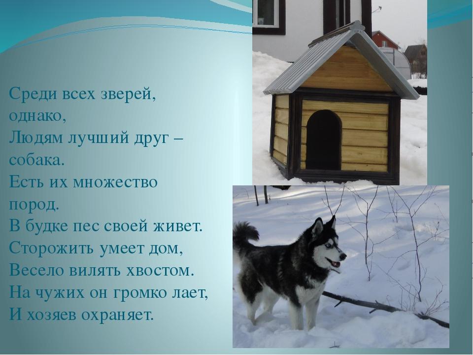 Среди всех зверей, однако, Людям лучший друг – собака. Есть их множество пор...