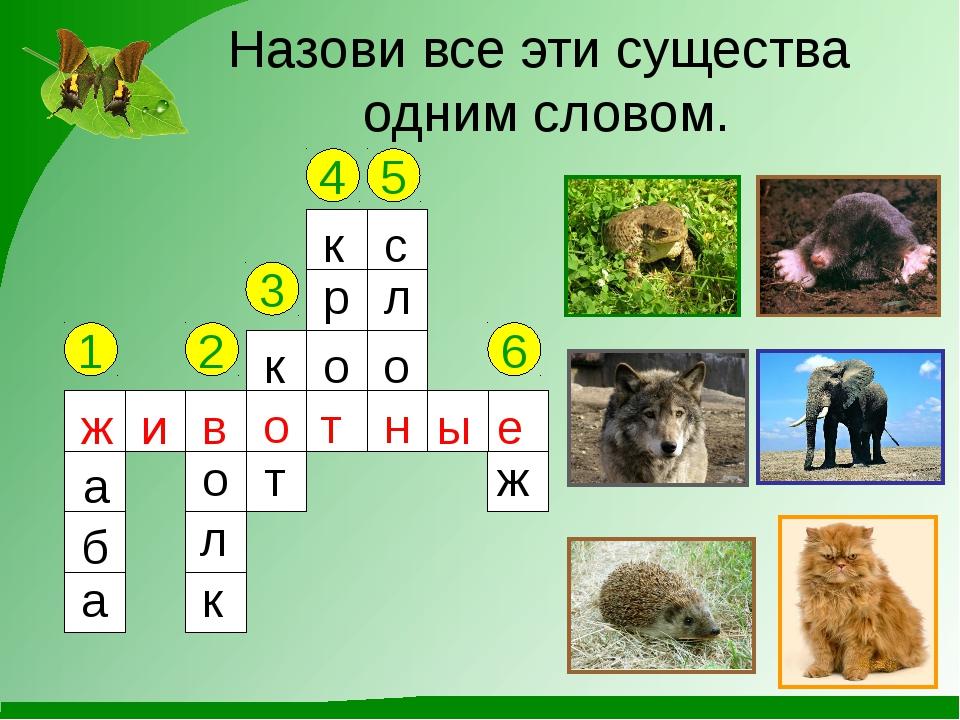 Назови все эти существа одним словом. 1 2 3 4 5 6 ж а б а в о л к к о т к р о...