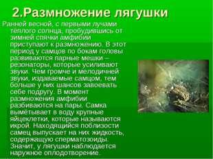 2.Размножение лягушки Ранней весной, с первыми лучами тёплого солнца, пробуди