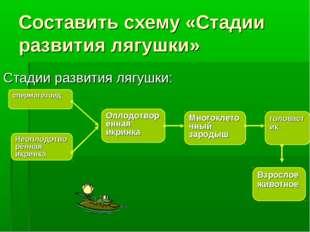 Составить схему «Стадии развития лягушки» Стадии развития лягушки: сперматозо