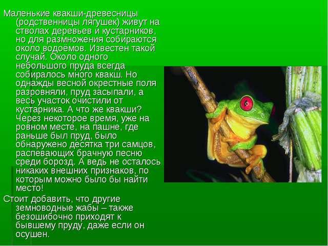 Маленькие квакши-древесницы (родственницы лягушек) живут на стволах деревьев...