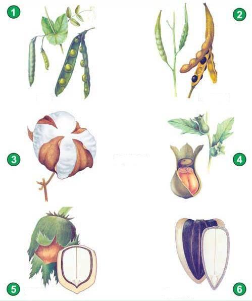 Сухие плоды