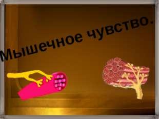Кинесте́зия (др.-греч.— «двигаю, прикасаюсь» + «чувство, ощущение») –мышечное