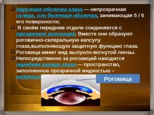 Наружная оболочка глаза — непрозрачная склера, или белочная оболочка, занимаю