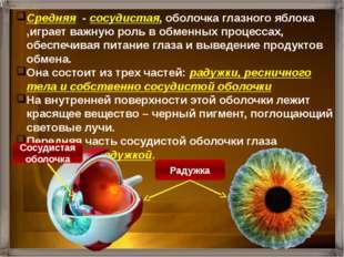 Средняя - сосудистая, оболочка глазного яблока ,играет важную роль в обменных