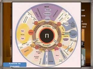 Иридодиагностика - диагностика болезней по изменению формы, структуры, цвета