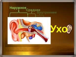 Состоит из ушной раковины и слухового прохода, заканчивающегося барабанной п