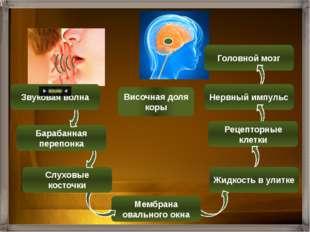 Отделы органа слуха Строение Функции Наружное ухо Ушная раковина Наружный слу