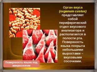 Язык человека покрыт более 5000 сосочков разной формы. У человека различают ч