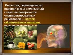 Нервные импульсы по обонятельным нервам поступают в обонятельны луковицы, а з
