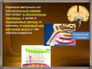 Количественные характеристики обоняния человека исследует наука ольфактометри
