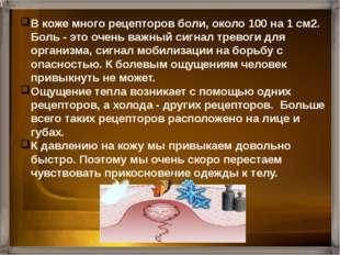 Рецепторы Свободные нервные окончания Нервные окончания у корня волос Осязате