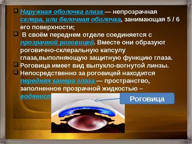 Наружная оболочка глаза — непрозрачная склера, или белочная оболочка, занимаю...