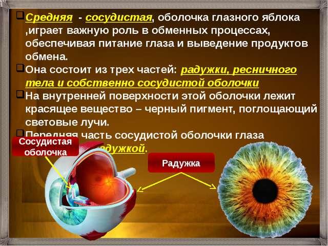 Средняя - сосудистая, оболочка глазного яблока ,играет важную роль в обменных...
