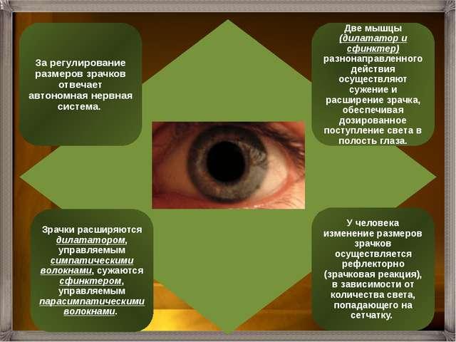 Внутренняя оболочка глаза – сетчатка - это рецепторная часть зрительного анал...