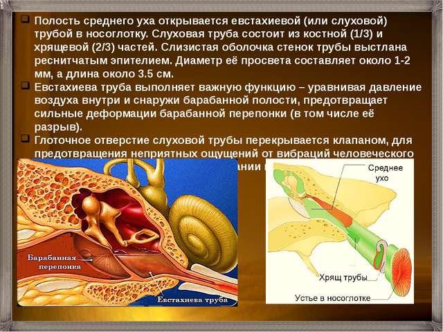 Слизистая оболочка полости уха, как и любая другая, содержит огромное количес...