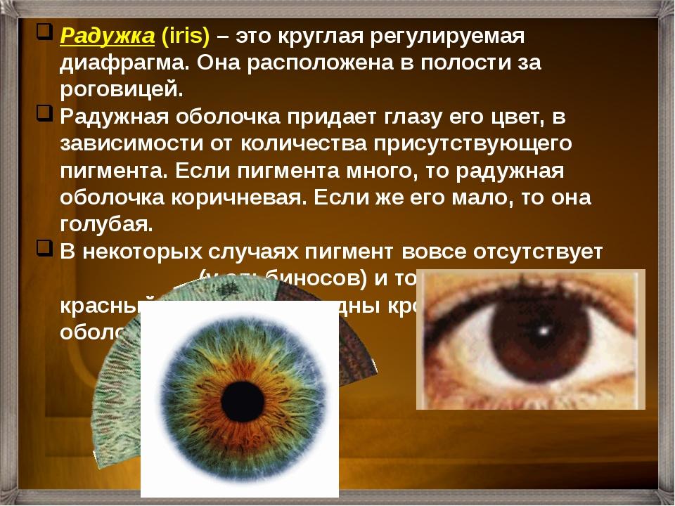 Радужка (iris) – это круглая регулируемая диафрагма. Она расположена в полост...