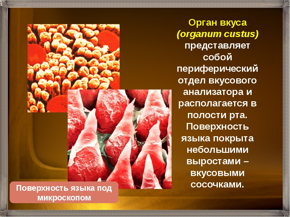 Язык человека покрыт более 5000 сосочков разной формы. У человека различают ч...