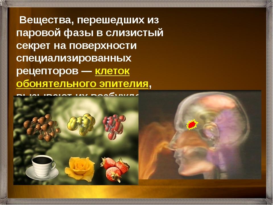 Нервные импульсы по обонятельным нервам поступают в обонятельны луковицы, а з...
