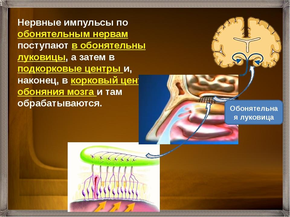 Количественные характеристики обоняния человека исследует наука ольфактометри...