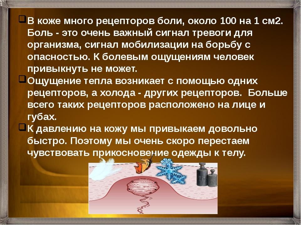 Рецепторы Свободные нервные окончания Нервные окончания у корня волос Осязате...