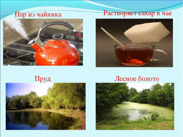 Пар из чайника Растворяет сахар в чае Пруд Лесное болото