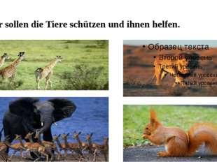 Wir sollen die Tiere schützen und ihnen helfen.